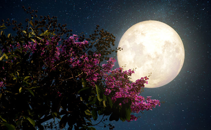 Ways to make your garden beautiful at night